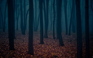 darkforest